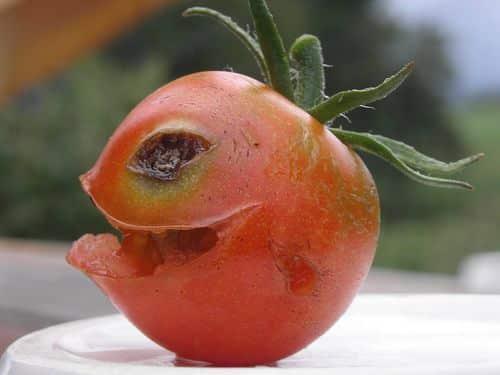 Tomate avec un visage